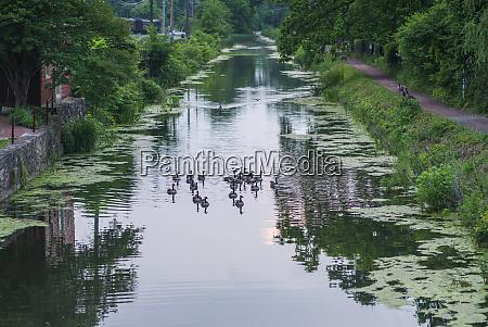usa pennsylvania new hope ducks in