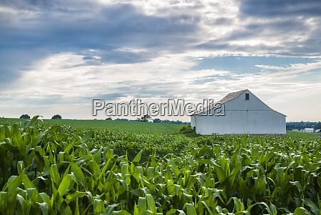 usa pennsylvania ronks farm