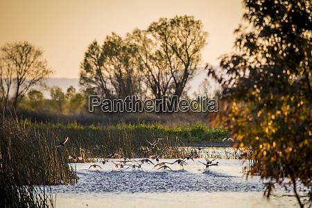 usa california gray lodge waterfowl management