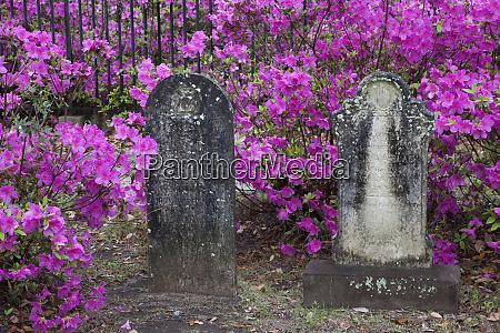 usa georgia savannah bonaventure cemetery in