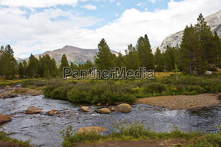 usa california yosemite national park tuolumne