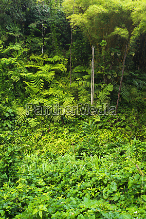 lush vegetation at akaka falls state