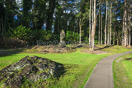 path through the lava tree molds
