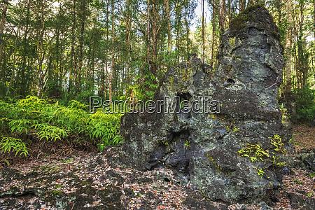 lava tree molds lava tree state