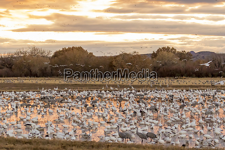 usa new mexico bosque del apache