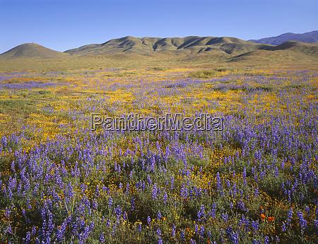 usa california carrizo plain national monument