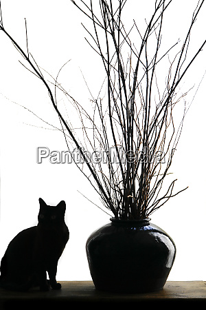 silhouetted image of a cat by