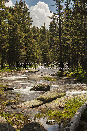 usa california dana meadows yosemite national