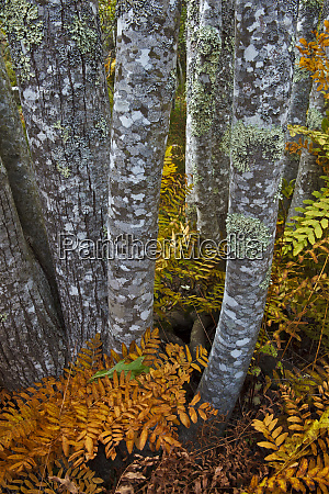 ferns and tree trunks in the
