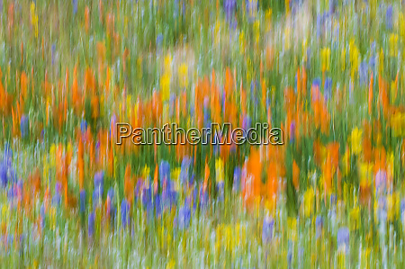 wildflower abstract tehachapi mountains angeles national
