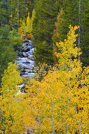 fall color along the south fork