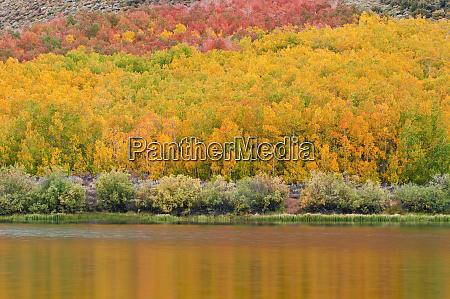 fall color at north lake inyo