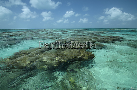 coral reef lighthouse reef atoll belize