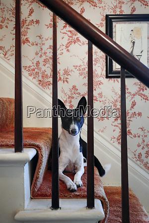 hund auf der treppe