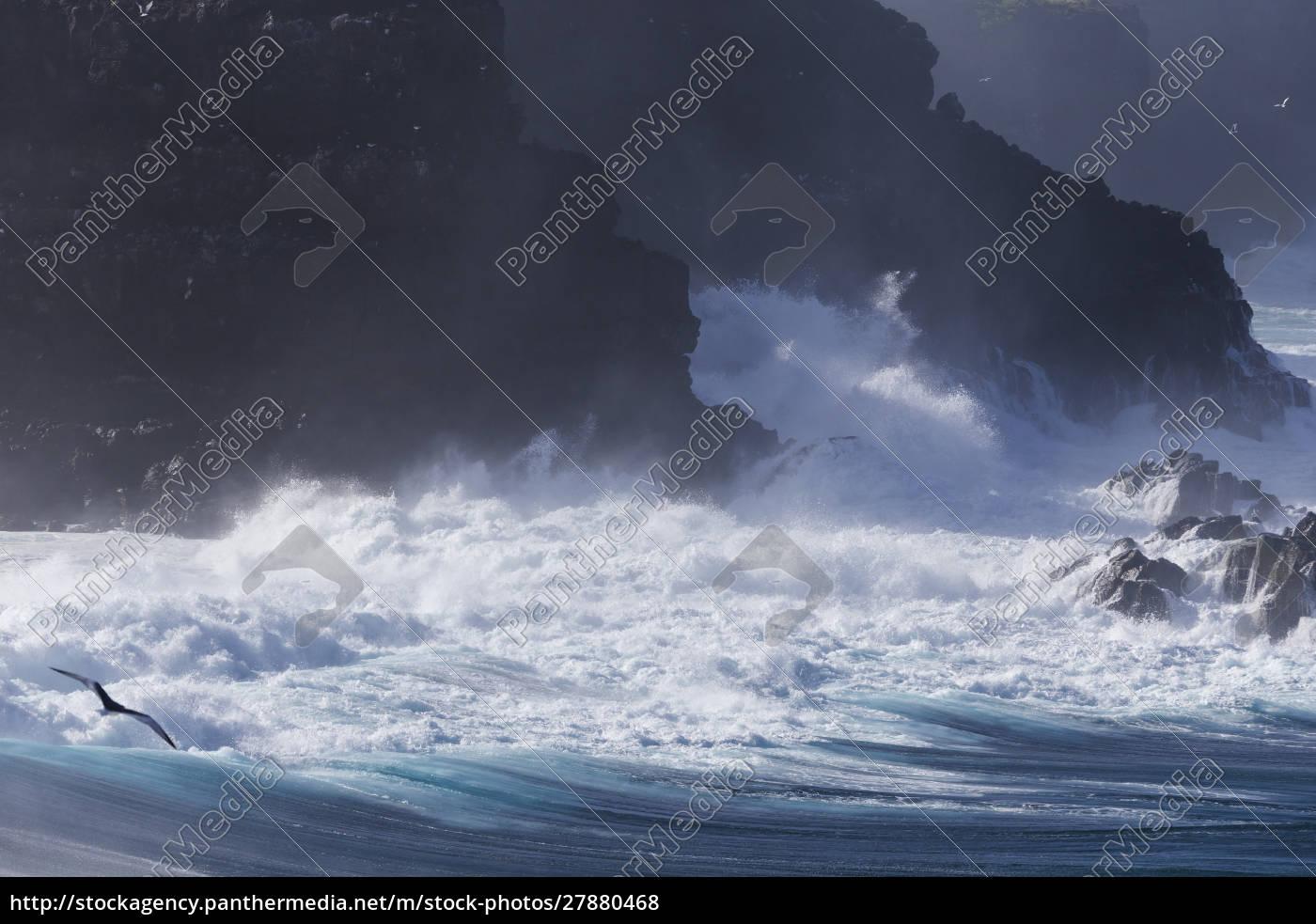 ecuador, galapagosinseln, espanola, punta, suarez., felsige, küste. - 27880468