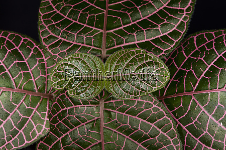understory plants yasuni national park amazon