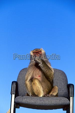 speak no evil monkey