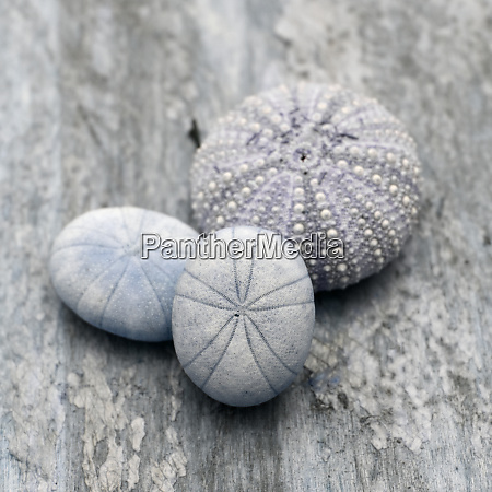 natutical shell stillleben