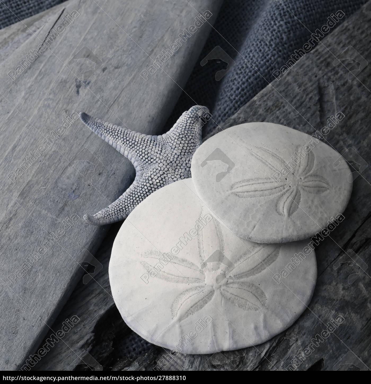 natutical, shell, stillleben. - 27888310