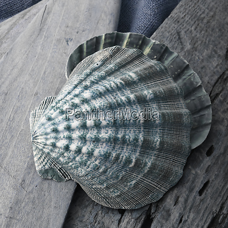 natutical, shell, stillleben. - 27888312