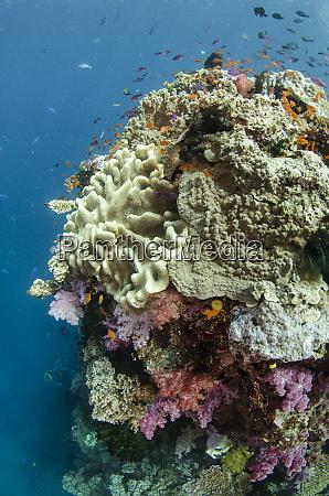 oceania fidschi