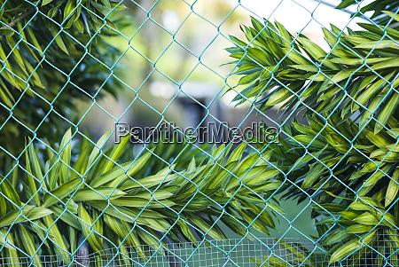 sint eustatius oranjestad tropische pflanzen