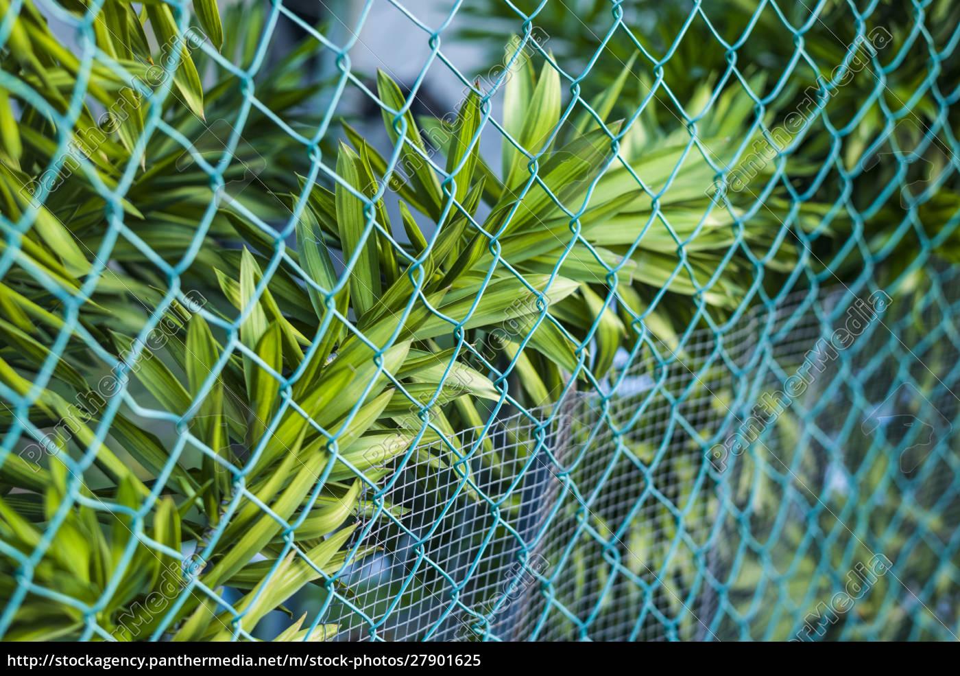 sint, eustatius., oranjestad, tropische, pflanzen - 27901625