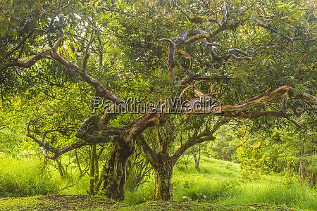 costa rica monteverde cloud forest reserve