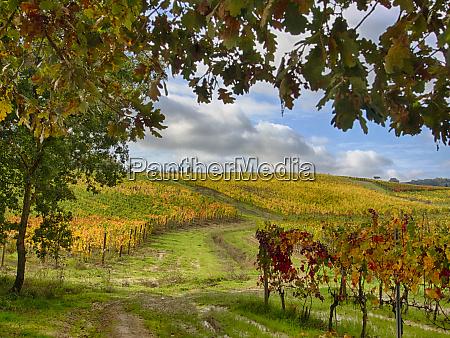 italy montepulciano autumn vineyards near montepulciano