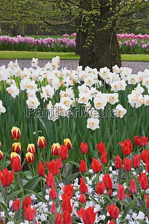 netherlands lisse scenic in keukenhof gardens