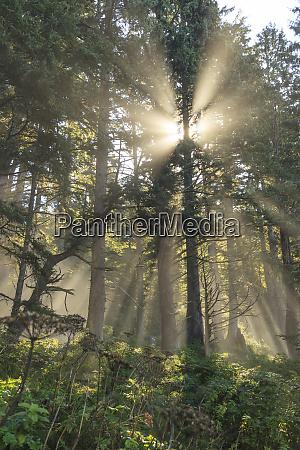 sun streaming through trees juan de