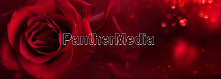rote rosen hintergrund