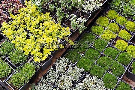 seedlings nursery