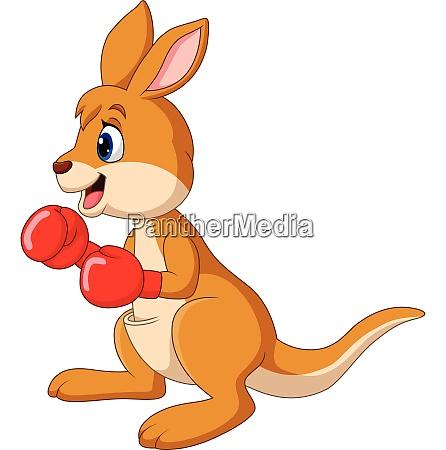 cartoon kaenguru boxen isoliert auf weissem