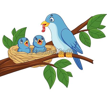 mutter blauer vogel fuettert babys in