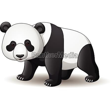 suesse baby panda cartoon
