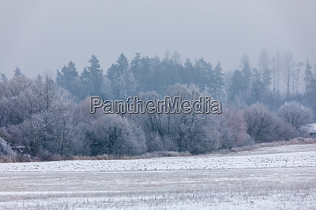 winterlandschaft mit schnee bedeckt