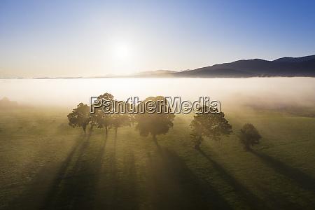 sonnenaufgang wiesenlandschaft mit baeumen und nebel