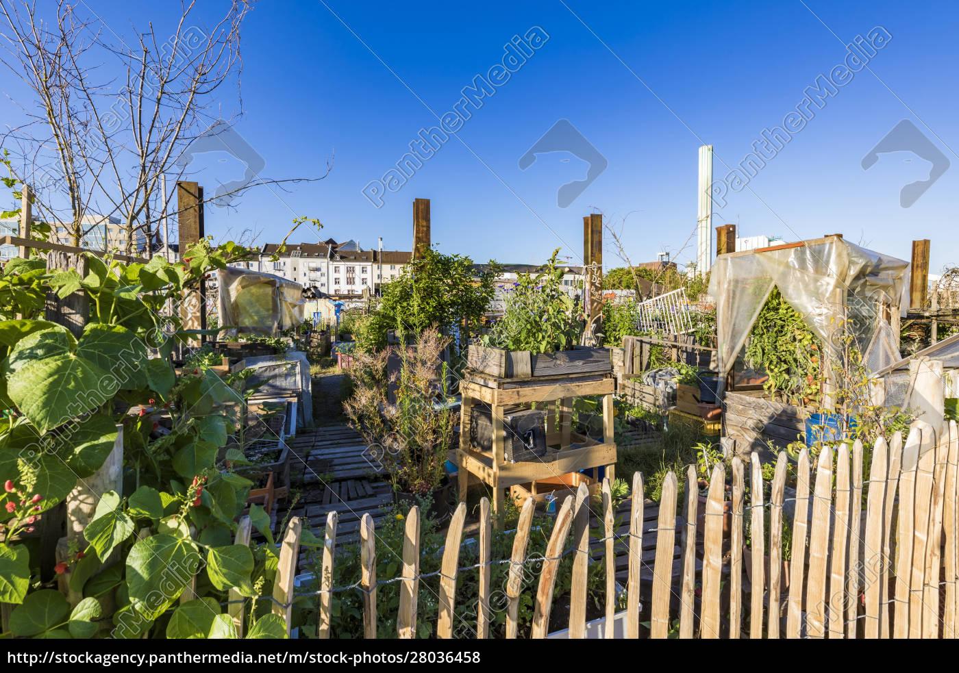 plants, growing, in, community, garden, at - 28036458