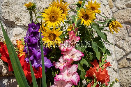 bluehende sonnenblumen und bunte gladioli vor