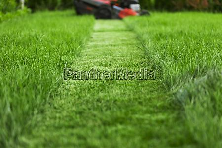 rasenmaeher schneiden hohe gruene gras in