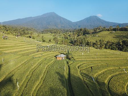 indonesien bali luftaufnahme der jatiluwih reisterrasse