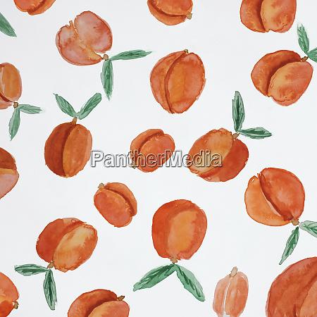 vollgesandenaufnahme von aquarell malerei von aprikosen