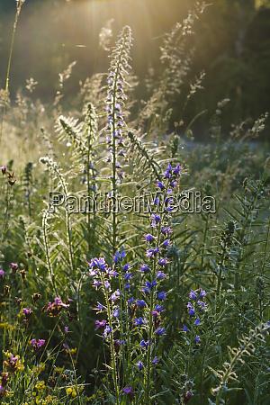 bluehende pflanzen wachsen im wald an