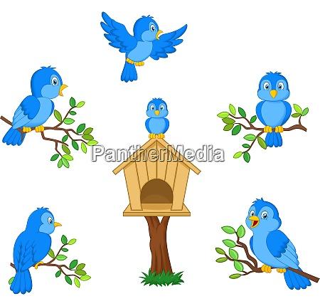 satz von cartoon blau vogel auf