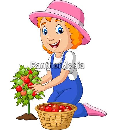 cartoon kleine maedchen ernte tomaten