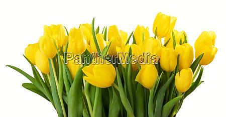 ein grosser blumenstrauss aus gelben tulpen