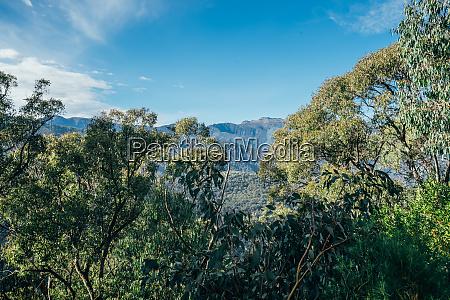 sonnige aussichtsdurchsichtliche baeume und berg australien