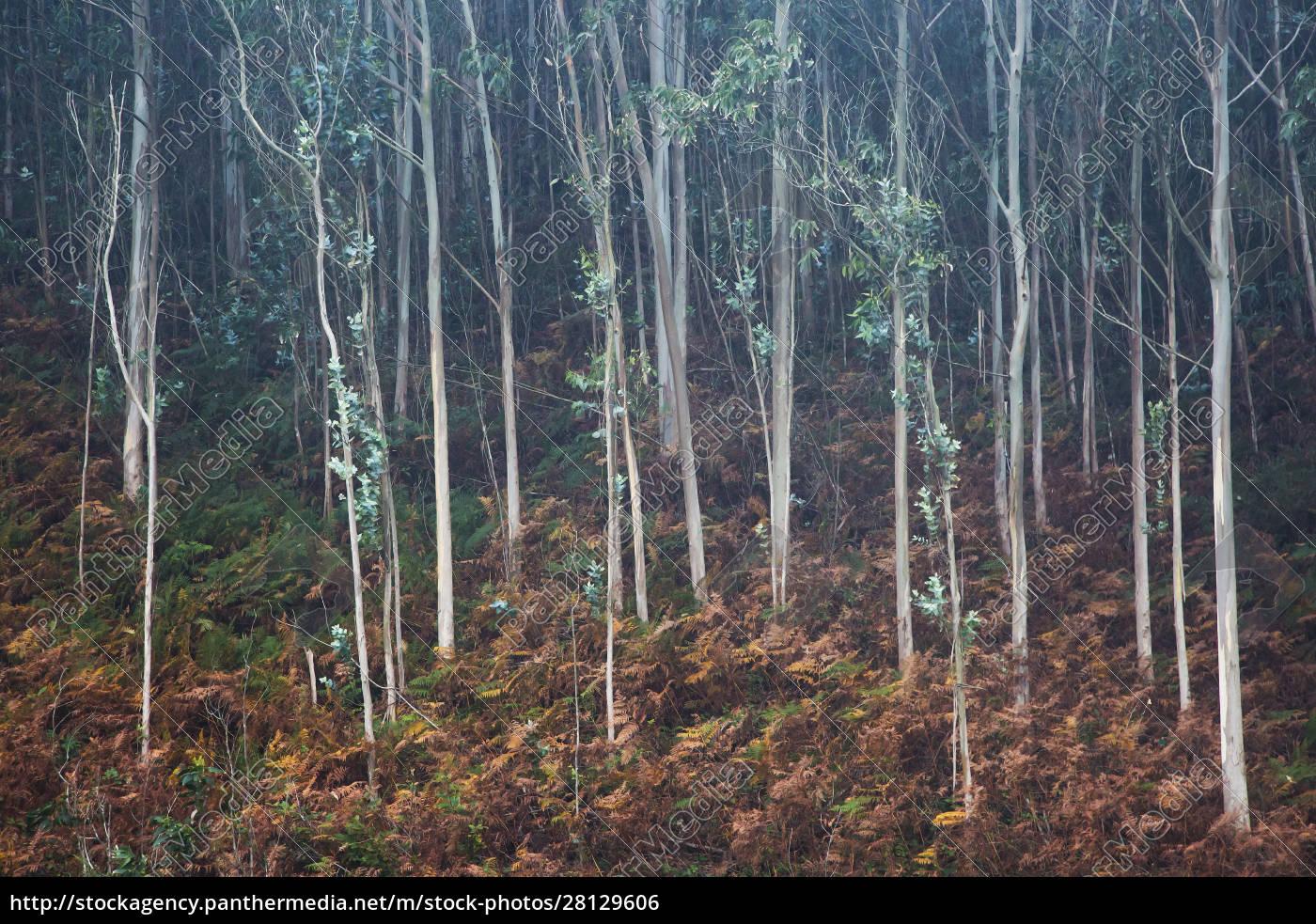 blätter, wachsen, auf, sämigenbäumen, in, wäldern - 28129606