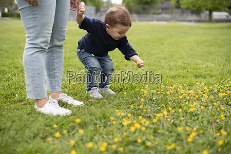 suesse unschuldige kleinkind maedchen pfluecken blumen